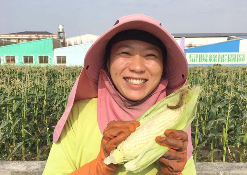 可口甜美的水果玉米